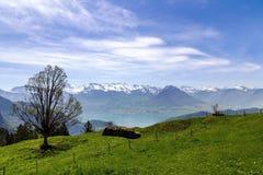 Ajardine a vista do lago Lucern, montanha de Apls com flor da grama Fotografia de Stock