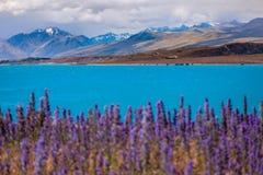Ajardine a vista do lago Tekapo e das montanhas com primeiro plano de florescência Fotos de Stock Royalty Free