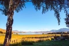 Ajardine a vista do lago Tekapo moldada com uma árvore no nascer do sol Foto de Stock
