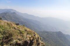Ajardine a vista do parque nacional da montanha do fá do qui de Phu em Chiang Rai, Tailândia Imagem de Stock