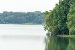 Ajardine a vista do rio e da floresta com céu azul Foto de Stock