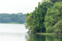 Ajardine a vista do rio e da floresta com céu azul Foto de Stock Royalty Free