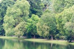 Ajardine a vista do rio e da floresta com céu azul Fotografia de Stock