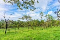 Ajardine a vista do savana tropical com céu nebuloso Imagens de Stock