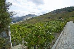 Ajardine a vista do vale verde com rio e vinhedo Fotografia de Stock