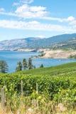 Ajardine a vista dos vinhedos, do lago, das montanhas e do céu azul no verão Imagem de Stock Royalty Free