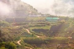 Ajardine a vista na plantação de chá 2000 na manhã em um nevoento Imagem de Stock Royalty Free