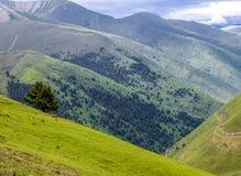 Ajardine a vista superior da montanha verde em Tibet, China Imagens de Stock Royalty Free