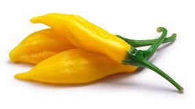 Aji Lemon Drop peppers, c.baccatum, paths Royalty Free Stock Image