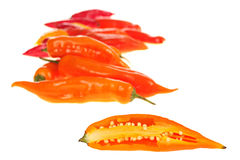 Aji on White Royalty Free Stock Image