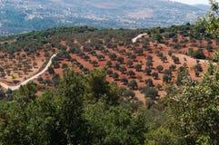 Ajloun, Jabal Ajlun, supporto Ajlun, Giordania, Medio Oriente Fotografia Stock Libera da Diritti