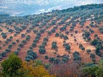 Ajloun, Jordan. View from the fortress, Ajloun, Jordan. Olive trees Stock Photo
