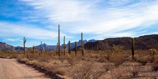 Ajo bergdrev passerar till och med monumentet för kaktuns för organröret den nationella Arkivfoto