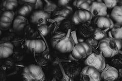 Ajo en blanco y negro fotografía de archivo