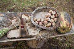 Ajo en la cesta, calabaza, planta, el heno Imagen de archivo