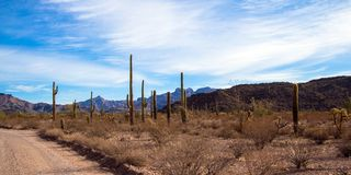 Ajo Mountain Drive passes through Organ Pipe Cactus National Monument. Ajo Mountain Drive passes through a scenic part of Organ Pipe Cactus National Monument in stock photo