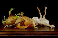 Ajo tres y pocas cebollas con el brote de florecimiento Foto de archivo libre de regalías
