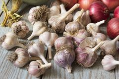 Ajo y cebollas de la cosecha Fotografía de archivo libre de regalías