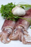 Ajo y perejil del calamar Imagen de archivo libre de regalías