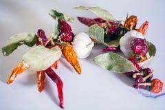Ajos, pimientas de chile, hojas de la bahía Fotografía de archivo