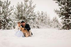 Ajouter à un chien dans la forêt d'hiver Images stock
