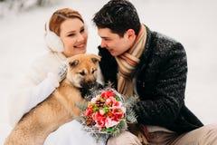 Ajouter à un chien dans la forêt d'hiver Image stock