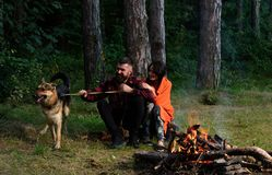 Ajouter au chien de berger allemand près du feu, Images stock