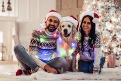 Ajouter au chien sur le ` s Ève de nouvelle année Image stock