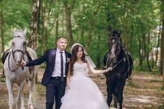 Ajouter aux chevaux Photographie stock