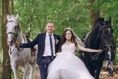 Ajouter aux chevaux Photo stock