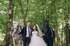 Ajouter aux chevaux Image libre de droits