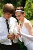 Ajouter aux pigeons Images stock