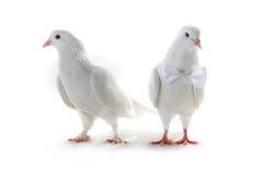 Ajouter de colombe au coeur et aux boucles Photographie stock libre de droits