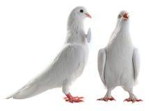 Ajouter de colombe au coeur et aux boucles Image stock
