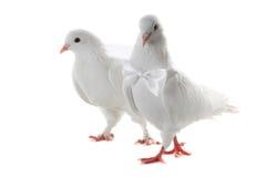 Ajouter de colombe au coeur et aux boucles Photo libre de droits