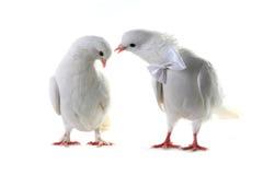 Ajouter de colombe au coeur et aux boucles Photos libres de droits