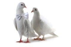 Ajouter de colombe au coeur et aux boucles Photographie stock