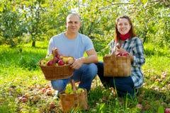 Ajouter heureux aux pommes moissonnées Photos stock