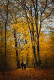 Ajouter méconnaissables au boguet sur la voie Arbres couverts de feuilles d'or dans la forêt d'automne Images libres de droits