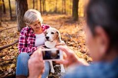 Ajouter supérieurs au chien sur une promenade dans une forêt d'automne Photo libre de droits