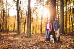 Ajouter supérieurs au chien sur une promenade dans une forêt d'automne Images libres de droits