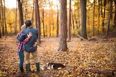 Ajouter supérieurs au chien sur une promenade dans une forêt d'automne Photographie stock