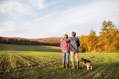 Ajouter supérieurs au chien sur une promenade dans une nature d'automne Photo libre de droits