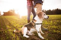 Ajouter supérieurs au chien sur une promenade dans une nature d'automne Photos stock