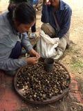 Ajoutez les champignons Basa Photographie stock libre de droits