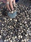 Ajoutez les champignons Basa Photo libre de droits