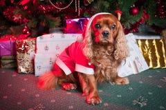 Ajudante pequeno de Santa Imagem de Stock Royalty Free
