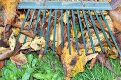 Ajuntando as folhas de outono Fotografia de Stock Royalty Free