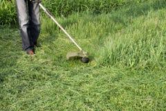 Ajustadores da aplicação Grama verde de sega usando uma linha de pesca ajustador Foto de Stock Royalty Free