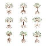 Ajuste árvores da cor com folhas e raizes Ilustração do vetor ilustração royalty free